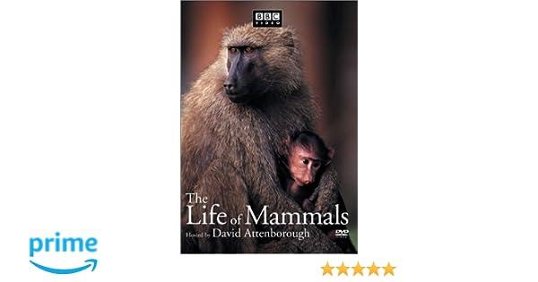 Amazon.com: The Life of Mammals, Vol. 4: David Attenborough, Michael deGruy, Paul Atkins: Movies & TV