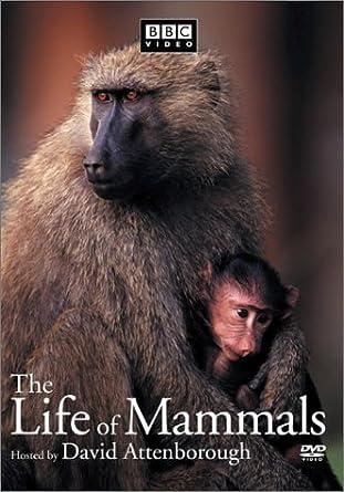 The Life of Mammals, Vol. 4