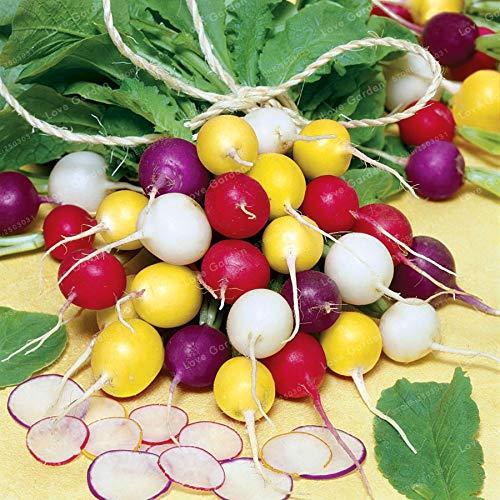 - Pinkdose 50 Pcs Rainbow Colour Cherry Belle Radish Bonsai 100% Real Bonsai Delicious Vegetable Bonsai Home Garden Plant Easy to Grow: Mix