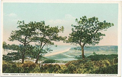 1898 Fine Art - Historic Pictoric Postcard Print | Torrey Pines, near La Jolla, Calif, 1898 | Vintage Fine Art