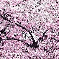 GEOPONICS Japonés semillas Flor de cerezo rosada Sakura, 20 semillas, semillas de Prunus dulce E3752