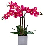 Homeseasons LED Pre-Lit Triple Stem Phalaenopsis Silk Phalaenopsis Arrangement-Battery Operated Lighted Artificial Orchid Plant(Purple)