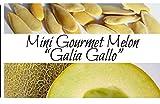 Melon - Galia Gallo | Liliana's Garden |
