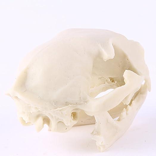 Homyl Realistic Lifelike Cat Skull Replica Lab Teaching Skeleton Model Collectibles Props