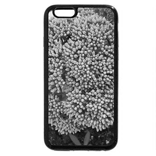 iPhone 6S Plus Case, iPhone 6 Plus Case (Black & White) - A day on the Acres 04