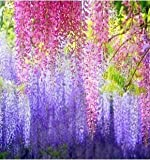 hot selling 35pcs/bag pink Wisteria Flower Seeds for DIY home garden Free shipping