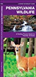 Pennsylvania Wildlife, James Kavanagh, 1583554831
