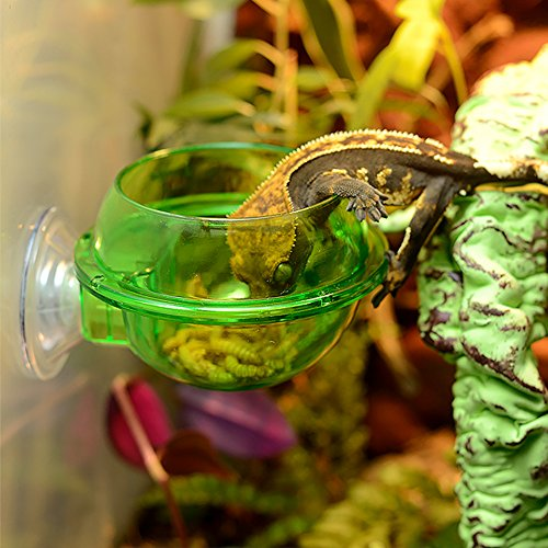 - EONMIR Suction Cup Feeder, Reptiles Ledge Accessories Supplies for Gecko, Chameleon