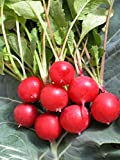 Cherry Radish Seeds Organic balcony potted plant growing green fruit Vegetable Red Radish Seeds for Home & Garden-60 PCS