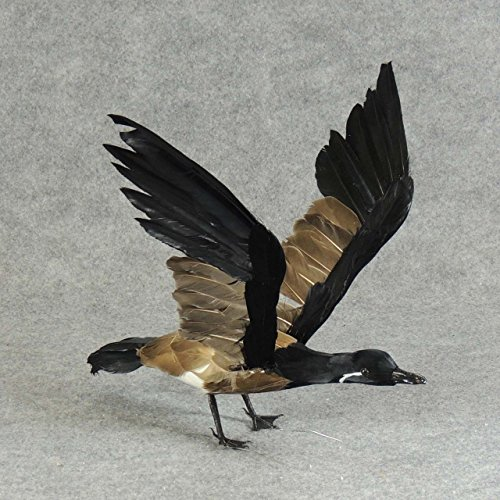 Lovely Feathered Flying Artificial Canadian Goose for Displaying and Embellishing