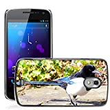 Hot Style Cell Phone PC Hard Case Cover // M00130873 Bird Pica Pica Corvidae Birds // Samsung Galaxy Nexus GT-i9250 i9250