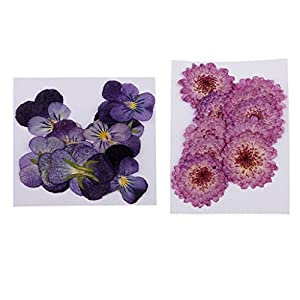 Baoblaze 22 Pieces Mixed Pressed Daisy Flowers Beautiful Pansy Flowers Collections Organic Natural Dried Flowers DIY Scrapbooking Art Floral Decors Crafts Home Wedding Decor Phone Cover Making 114