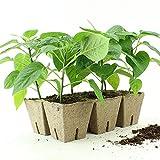 Jiffy Peat Pots 3'' X 3'' Strips 200 Strips (1200 Pots)