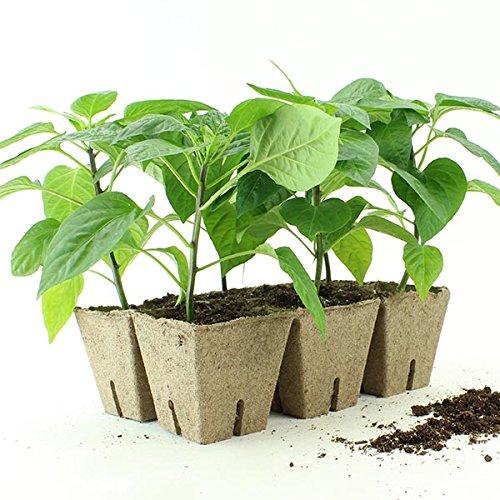 Jiffy Peat Pots 3'' X 3'' Strips 200 Strips (1200 Pots) by Jiffy