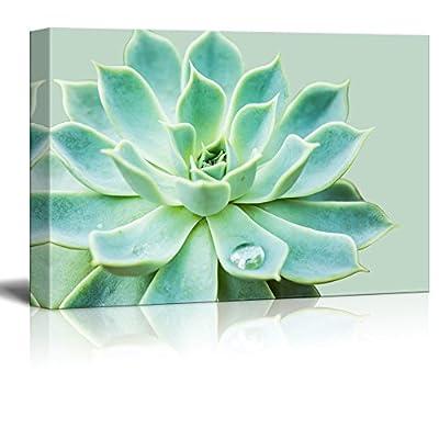 Green Succulent Green Background - Canvas Art
