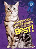 American Shorthairs Are the Best! (Best Cats Ever)