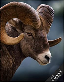 Animal Notebook Collection: Ram, Journal/Diary, Wide Ruled, 100 Pages, 8.5 x 11, Composition Book: Volume 8