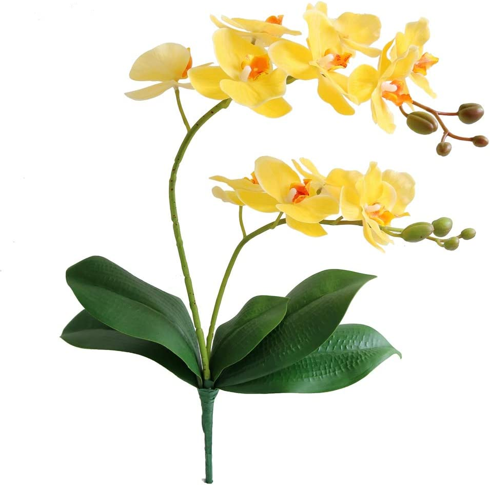 Amazon Com Jasming Artificial Phaleanopsis Flowers Fake Orchids