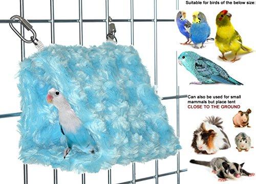 First Parakeet - 6