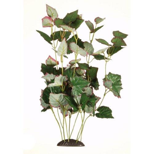 Marina Ecoscaper Trapa Natans Plant, 12-Inch Hagen Plant