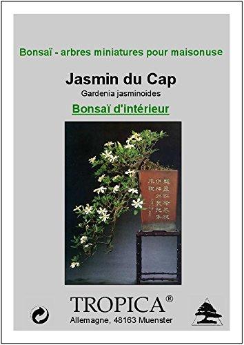 Tropica - Bonsai - Gardenie (Gardenia jasminoides) - 50 Samen ...