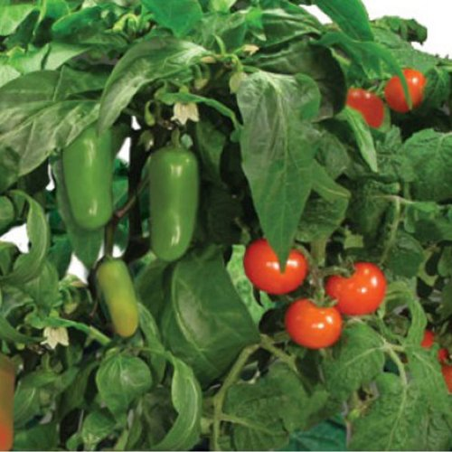 AeroGarden - Salsa Garden Seed Kit - Includes 2 Cherry Tomato 1 (Salsa Seed Kit)