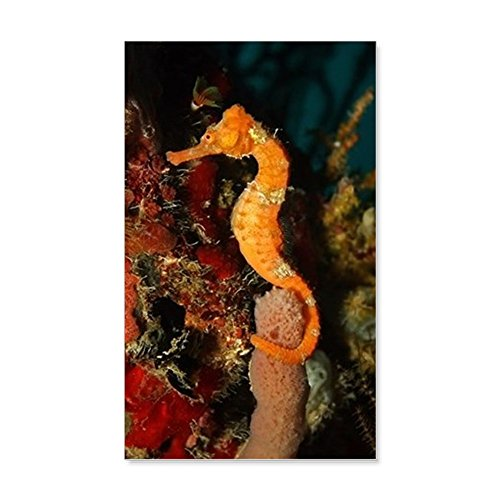 20 x 12 Wall Vinyl Sticker Seahorse Holding Coral