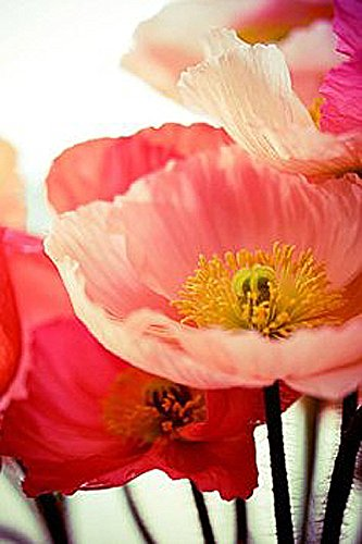 100,000 Shirley Poppies Seeds: Pastel Poppy Seeds - Non GMO and Neonicotinoid Seed California Poppy Seed Paper
