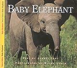 Baby Elephant, Aubrey Lang, 1550417150