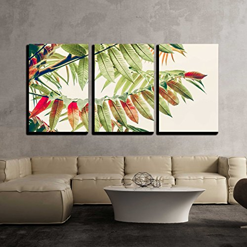 Beautiful Green Red Leaves Tropical Leaves on Light Background Autumn Fall Nature x3 Panels