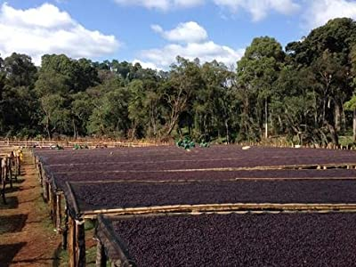 5LBS Ethiopia Natural Sidamo Unroasted Green Coffee Beans by Bodhi Leaf Trading Company