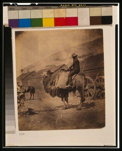 Foto: Dromedary, hombre sentado en camello, casetas, 1855, Guerra de Crimea