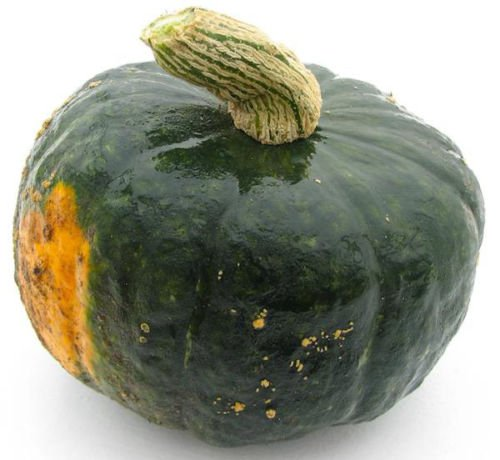 - Winter Squash Burgess Buttercup 25 seeds Heirloom Non GMO CombSH K25