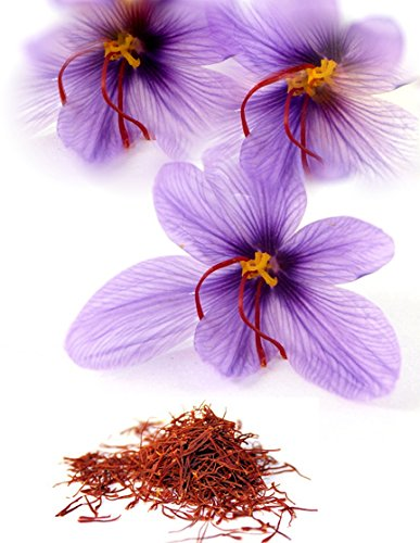 15 JUMBO Saffron Crocus Corms/Bulbs ~ FALL blooming ~ RARE SPICE ~ crocus sativus by FLOWERSofTOMORROW