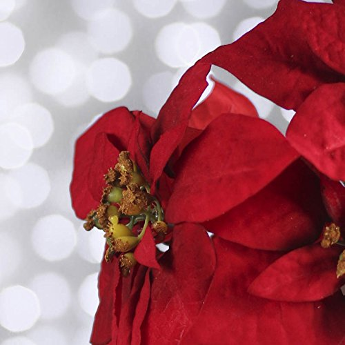 Group of 12 Realistic Look Artificial Christmas Red Poinsettia Blooms on Stems