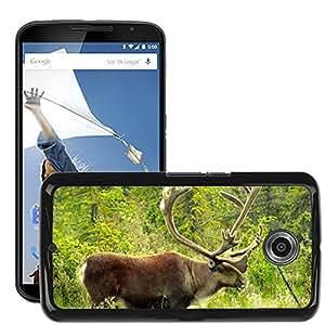 Hot Style Cell Phone PC Hard Case Cover // M00113107 Caribou Alaska Animal Wildlife North // LG Google Nexus 6