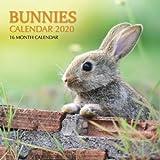 Bunnies Calendar 2020: 16 Month Calendar