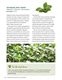 Growing Your Own Tea Garden: The Guide to Growing