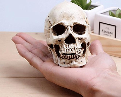 Small Size Replica Realistic Human Skull Gothic Party Decoration Ornament Yanoen