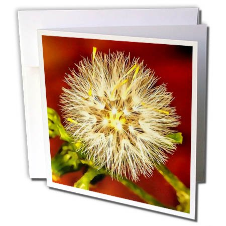3dRose Taiche - Acrylic Painting - Wildflower - Make A Wish Dandelion Seed - 6 Greeting Cards with Envelopes (gc_284721_1) ()
