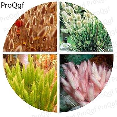 Fotcus - Prodgf 1000Pcs A Set white bunny tails grass random color pink pink cross shamrock grass iron gold - (Color: white bunny tails gr) : Garden & Outdoor