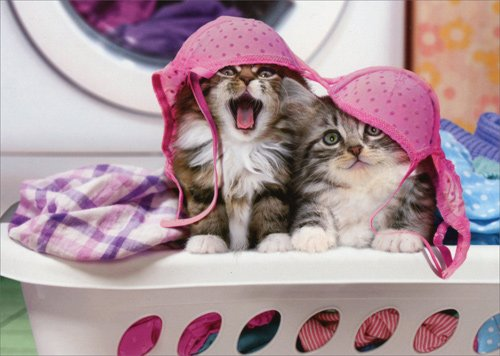 Two Cats Wearing Lingerie On Hamper - Avanti Funny Kitten Birthday Card
