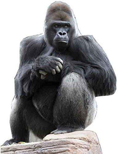 IdealWigsNet Ritaglio di Cartone Gorilla - 1,26 cm