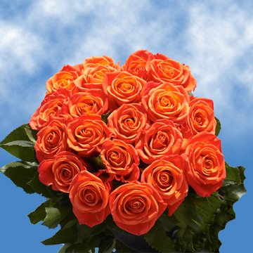 GlobalRose 50 Fresh Cut Orange Roses for Valentine's Day - Impulse Roses - Fresh Flowers Express Delivery - Perfect for Valentine's Day