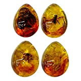VORCOOL Amber Fossil with Insects Samples Stones