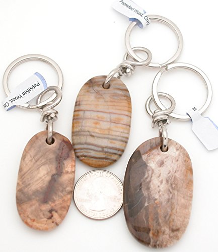 Petrified Wood Beads (Genuine Oregon Petrified Wood Tumbled Gemstone Keychain Ring, Large Tumbled Stone, One (1) item.)