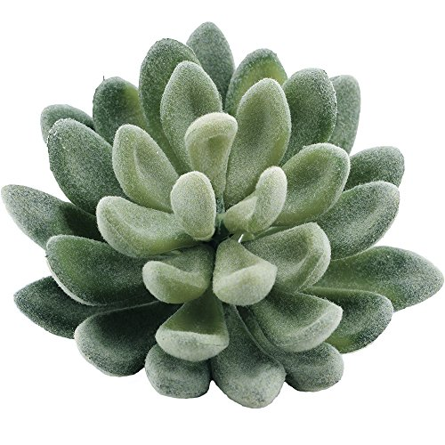 "Supla Pack of 4 Artificial Echeveria Succulent Picks in Flocked Green 3.33""Wide x (Faux Succulent)"