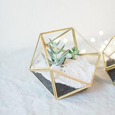 Bella's garden Geometric Copper Glass Terrarium Container Desktop Planter for Succulent Fern Moss Air Plants Holder Miniature Outdoor Fairy Garden Gift Wedding Decor Box (Small, Gold)
