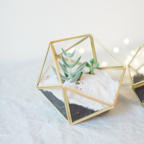 Bella's garden Geometric Copper Terrarium Container Desktop Planter for Succulent Fern Moss Air Plants Holder Miniature Outdoor Fairy Garden Gift Wedding Ring Glass Box (small, gold)
