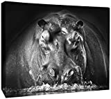JP London DDCNV1 X 1057589 Ready to Hang Feature Wall Art Power Hippo Lodge Black White Animal 2'' Thick Heavyweight Gallery Wrap Canvas 60'' x 40''
